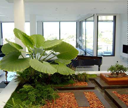 Plantas para porches cubiertos