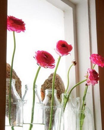 flores ventana