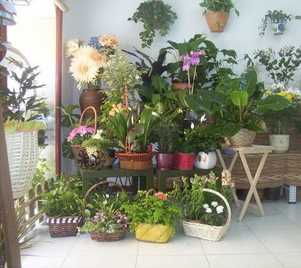 Usa plantas en casa for Como decorar un jardin con plantas