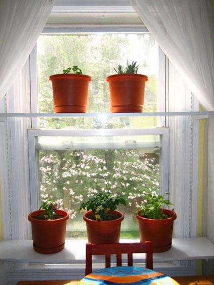 Balcones y terrazas - Vitaminas para plantas de interior ...