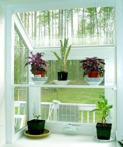 Añade plantas a la decoración interior