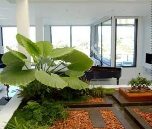 Dando Vida con Plantas