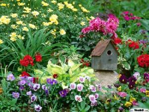 Muchos colores en el jardín