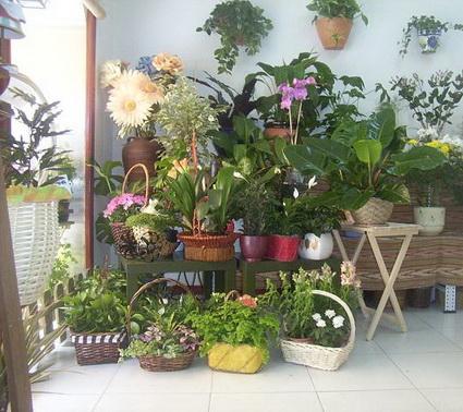 Usa plantas en casa