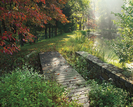 Ideas para embellecer tu jardín